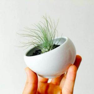 terrarium - idées cadeaux fête des mères